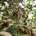 Not all trees want to be hugged.- Ho'omaluhia Botanical Gardens