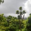 The park seems like a tropical jungle.- Ho'omaluhia Botanical Gardens