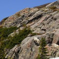 Mountain goats, they're everywhere.- Blue Lakes Trail