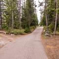 The campground loop road.- Jenny Lake Campground