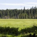 The surrounding field and wetland around camp.- Joe Graham Horse Camp