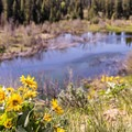 These pools are prime moose territory.- Moose-Teton Road Ponds