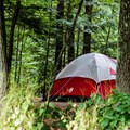 A wooded tent site.- Wilgus State Park