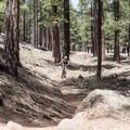 The Schultz Creek Trail.- Schultz Creek Trail