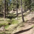 The trail follows the banks of Schultz Creek, seen here running with snowmelt.- Schultz Creek Trail