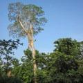 The jungle along the Mopan River. - Mopan River Float