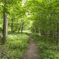 A dirt path will lead you through the woods.- Overlook Trail to Lambs Hill