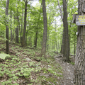 A sign to Malouf's Mountain Camping.- Overlook Trail to Lambs Hill