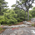 The intersection of the Overlook Trail, with red blazes, and Fishkill Ridge, with white blazes.- Overlook Trail to Lambs Hill