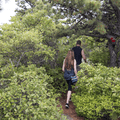 Hikers approaching pine trees near the top.- Overlook Trail to Lambs Hill