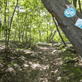 Three types of trail markers lead into the woods.- The Long Path: Gonzaga Park to Schunemunk State Park