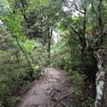 The Ōtepatotu Track.- Ōtepatotu Track to Lavericks Peak