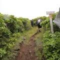 The narrow Ōtepatotu Track near the summit of Lavericks Peak.- Ōtepatotu Track to Lavericks Peak