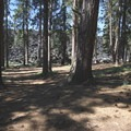 The lava flow dominates the view from the interior of the campground.- Lava Flow Campground