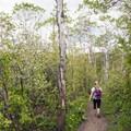 An aspen grove around Limestone Creek.- Triple Tree Trail