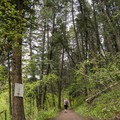 The forested Triple Tree Trail. There are more than three trees here.- Triple Tree Trail