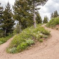 A switchback up to the meadow.- Triple Tree Trail