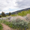 A flower and sagebrush-covered meadow with views of Lower Mount Ellis and Chestnut Mountain in the distance.- Triple Tree Trail