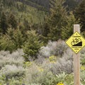 A speed reminder for mountain bikers.- Triple Tree Trail