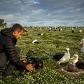 Filmmaker Ian Shive films Laysan albatross (Phoebastria immutabilis) on Midway Atoll in the North Pacific Ocean. Photo by Ian Shive.- Midway Atoll National Wildlife Refuge + Battle of Midway National Memorial