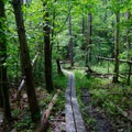 Planks to help hikers avoid mud and preserve the trails.- Christman Sanctuary