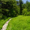 Planks along the trail to avoid mud. Not all areas along the trail are free of mud.- Christman Sanctuary