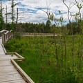 One of the two benches on the boardwalk. - Alice Bemis Thompson Wildlife Sanctuary