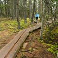 Boardwalks line the wettest portion of the trail.- Ship Harbor Trail