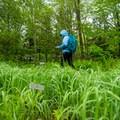 Wandering the gardens.- Sieur de Monts Nature Center + Wild Gardens