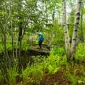 A few bridges span small streams.- Sieur de Monts Nature Center + Wild Gardens