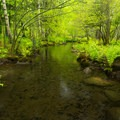 A small stream flows through the wild gardens.- Sieur de Monts Nature Center + Wild Gardens