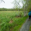 The Great Meadow often harbors deer.- Jesup Path
