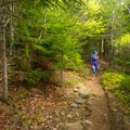 The forested descent on the western trail.- Beech Mountain Fire Tower