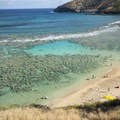 View of Hanauma Bay's coral reef, which is almost completely dead.- Hanauma Bay