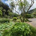 Waimea Valley Botanical Garden.- Waimea Valley Botanical Garden + Cultural Center