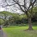 Main pathway to Waimea Falls within Waimea Valley.- Waimea Valley Botanical Garden + Cultural Center