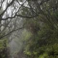A dirt road shrouded in mist.- Kamakou Preserve + Pepe'opae Bog Trail
