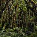 A bog along the trail.- Kamakou Preserve + Pepe'opae Bog Trail