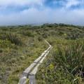 The Pepe'opae Bog Trailhead.- Kamakou Preserve + Pepe'opae Bog Trail