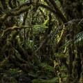 The Pepe'opae Bog. - Kamakou Preserve + Pepe'opae Bog Trail