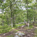 Well-traveled trails along the top of the ridge.- Breakneck Ridge