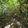 Thick vegetation over the Maunawili Falls Trail.- Maunawili Falls Hike