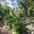 Maunawili Falls Trail connects with Maunawili Stream.- Maunawili Falls Hike
