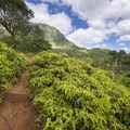 First view of the Ko'olau Range from the Maunawili Falls Trail.- Maunawili Falls Hike