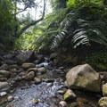 Maunawili Stream en route to Maunawili Falls.- Maunawili Falls Hike