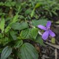 Unidentified species along the Maunawili Falls Trail.- Maunawili Falls Hike