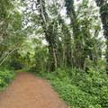 Likeke Falls Trail.- Likeke Falls