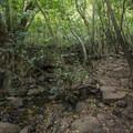 Lulumahu Falls Trail.- Lulumahu Falls Hike