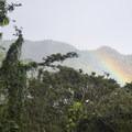 Rainbow along the hike to Mānoa Falls.- Mānoa Falls Hike