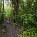 Hikers en route to Mānoa Falls.- Mānoa Falls Hike